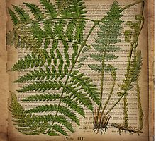 vintage hipster botanical print fern leaves by lfang77
