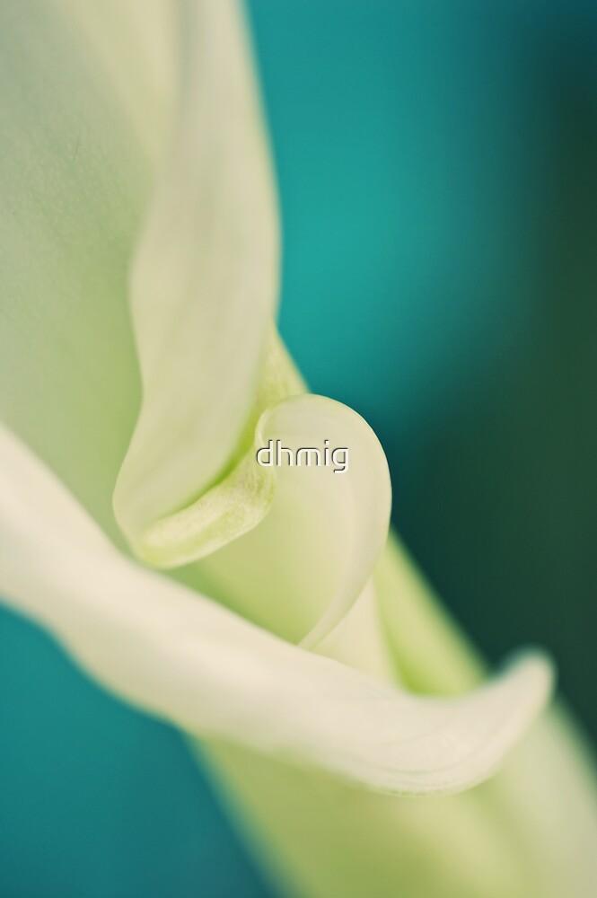 Soft curves by dhmig