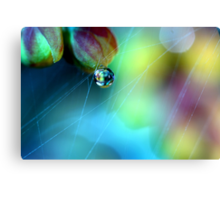 Rainbow Web Canvas Print