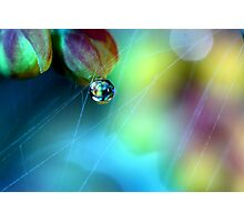 Rainbow Web Photographic Print