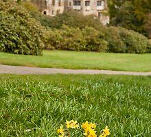 Scotney Castle, Daffodils in Focus by Dawn OConnor