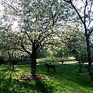 Dark Dog Under the Apple Tree by Lolabud