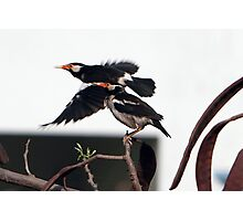 Birds. Photographic Print