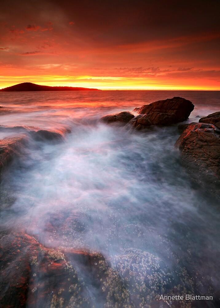 Morning Glory by Annette Blattman