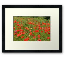 red poppies in the field Framed Print