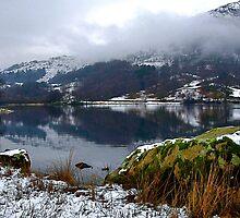 """""""Green Winter"""" by Bradley Shawn  Rabon"""