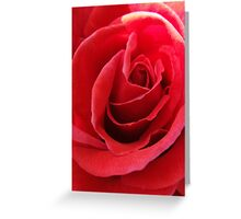 Red Rose Card Greeting Card