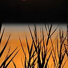 Reeds at sunset by Wayne England