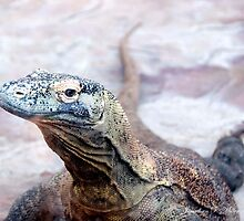 komodo Dragon by Jonathan Miller