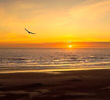 Tranquil Skys and High Color A Newport Oregon Sunset by Diane Schuster