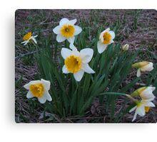 Daffodils At Dusk Canvas Print