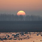 Ouse Washes at Dawn by SteveDubois