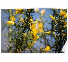 Yellow flowers from the spring ! Poster