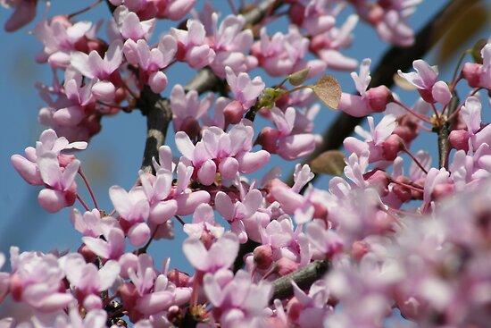 Blossoms 2 by Nicki Kenyon
