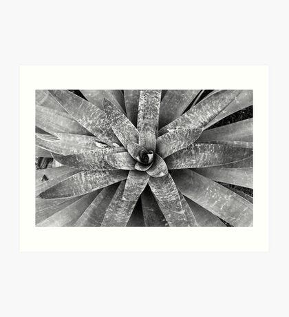Monochromatic Bromeliad Art Print