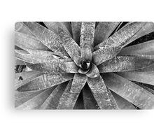 Monochromatic Bromeliad Canvas Print