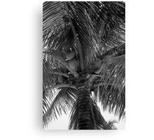 Key West Palm Canvas Print