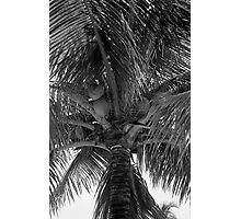 Key West Palm Photographic Print