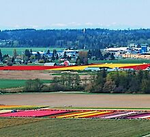 Over Tulip Town by Tori Snow