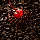Cherry Buoy in a Sea of Chocolate by Kory Trapane