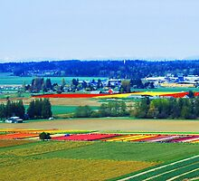 Over Skagit Valley by Tori Snow