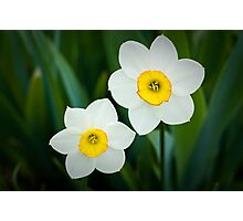 Poeticus Narcissus Photographic Print