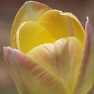 Tulip by Michele Markley