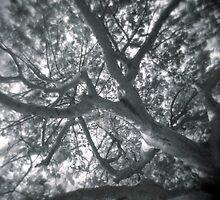 Holga looks to the sky through the trees by AnalogSoulPhoto