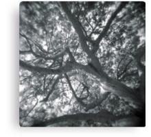 Holga looks to the sky through the trees Canvas Print
