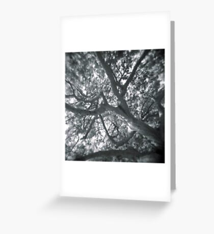 Holga looks to the sky through the trees Greeting Card