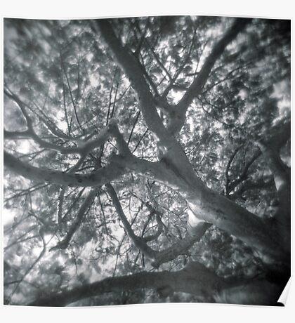 Holga looks to the sky through the trees Poster
