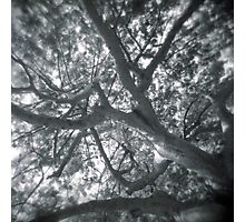 Holga looks to the sky through the trees Photographic Print