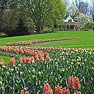 Flower Trail by Monnie Ryan