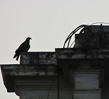 Eagle's wait - end of the day - king of the building by jchandhok