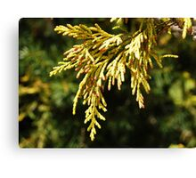 Signs of Spring : Nature's Braids ! Canvas Print