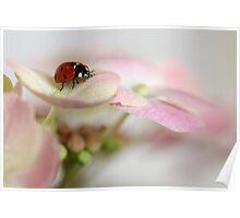Ladybird on hydrangea Poster