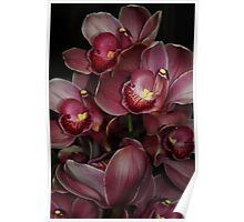 Burgandy Orchid Poster