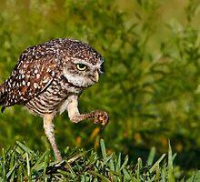 Owl Ya Doin? by Kathy Cline