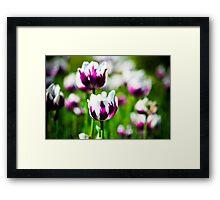Tulip 3 Framed Print
