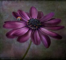 Daisy lady by Mandy Disher
