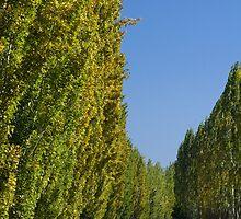 Gould Memorial Drive - Autumn 2010 by Dean Osborne