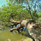 Tree Fallen In The Lagoon. (Please Veiw Lager) by Wanda Raines