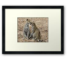 Mother And Daughter Leopards - South Africa Framed Print
