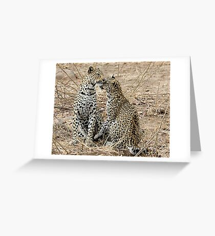 Mother And Daughter Leopards - South Africa Greeting Card