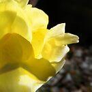 Yellow Mellow  by Rowan Osguthorpe