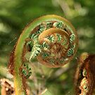 Fiddlehead by middleofaplace