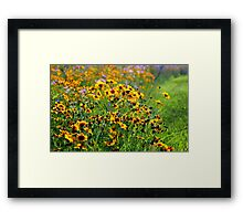 Blue Ridge Coreopsis Framed Print