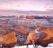 Canyon Fox by Cliff Vestergaard