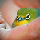 A bird in the Hand is worth two in the Bush by Kym Howard