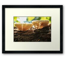 Mushroom on Log Framed Print
